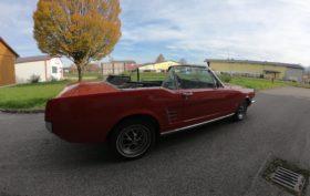 Mustang seitlich mit baum